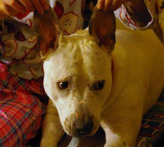 Semi & the dawg 085